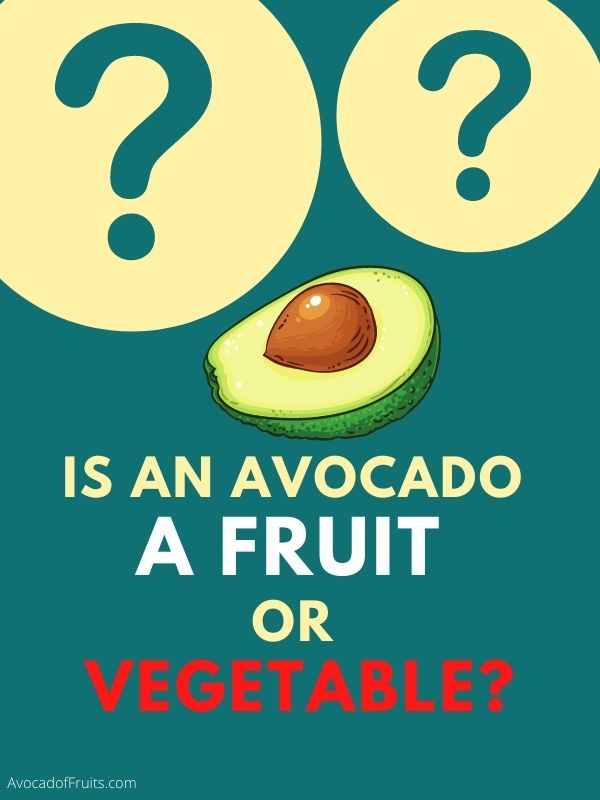 Is An Avocado A Fruit Or Vegetable