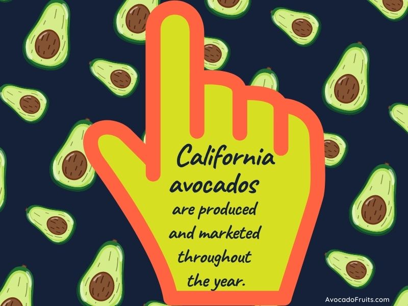 California avocados are produced and marketed throughout the year.