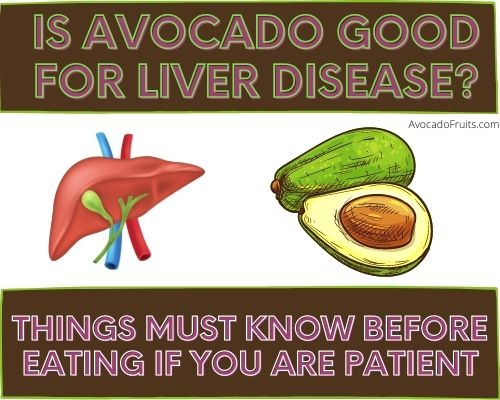 Is Avocado Good For Liver Disease Things to know before eating