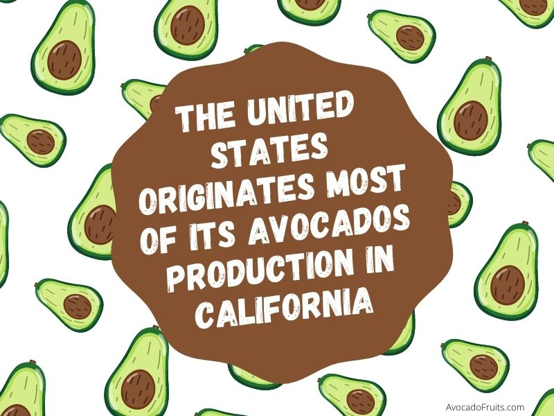 Where Does The United States Get Most Of Its Avocados? The United States originates most of its Avocados production in California states.