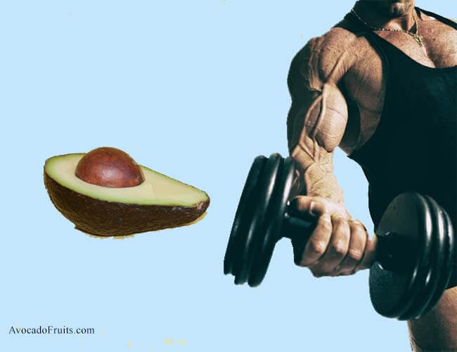 Avocado Calories and nutrition facts For Bodybuilding