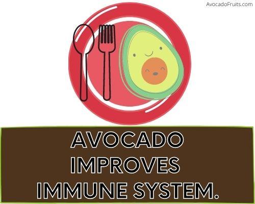 Avocado Improves Immune System