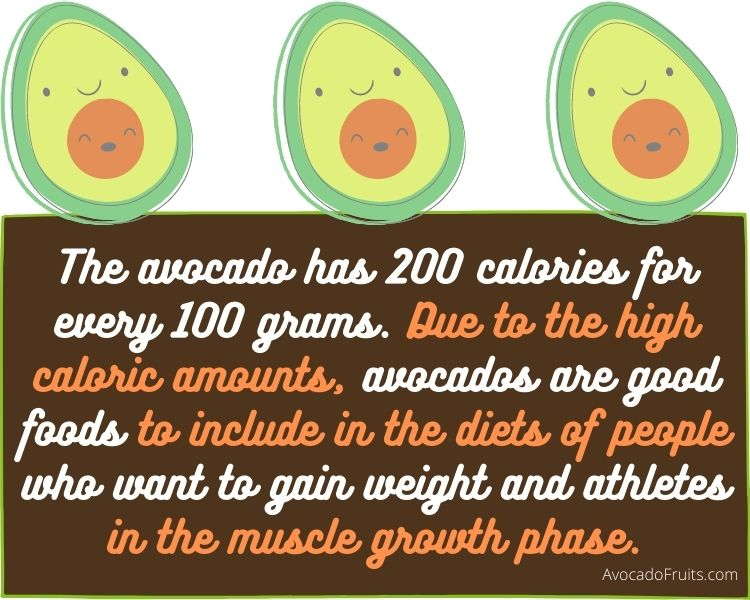 The avocado has 200 calories for every 100 grams. Due to the high caloric amounts, avocados are good foods to include in the diets of people who want to gain weight and athletes in the muscle growth phase.
