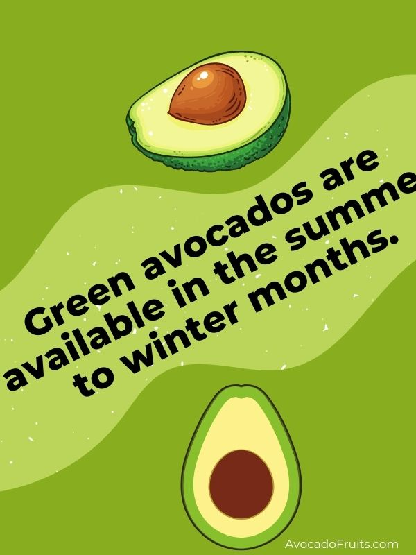 Green avocados are available in the summer to winter months.