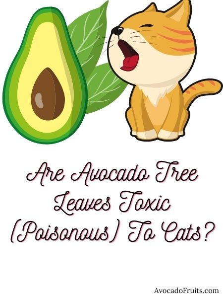 Are Avocado Tree Leaves Toxic (Poisonous) To Cats