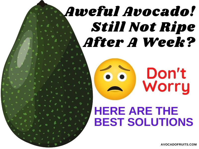 Avocado Still Not Ripe After A Week Don't Worry! Here Are The Best Solutions