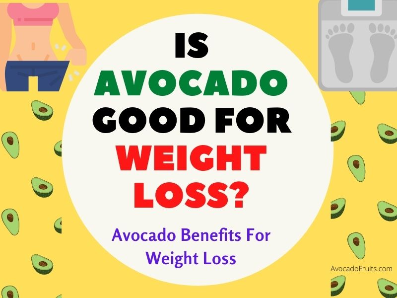 Is Avocado Good For Weight Loss Know More About Avocado Benefits For Weight Loss